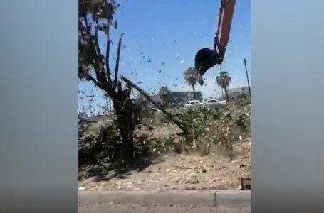 """""""Da tristeza que árboles de años los hayan tumbado"""" denuncian en La Jaramillo"""