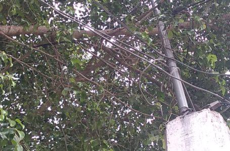 Árbol alcanza infraestructura eléctrica, se han registrado cortos, denuncian en Las Huertas