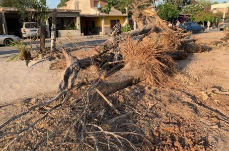 Un ecocidio, tala y destrucción de área verde en La Jaramillo, consideran vecinos