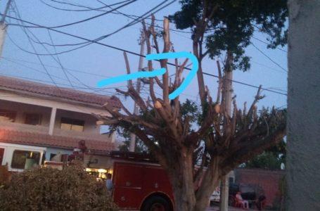 CFE y Bomberos atienden reporte de árbol que cubría infraestructura eléctrica