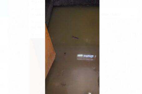 Brotan aguas negras dentro de casas en Ejido México
