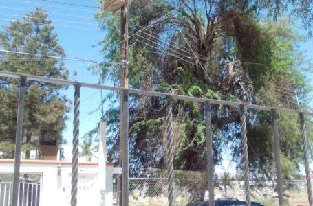 Fluyen más reportes de poda de árboles después de fuertes vientos